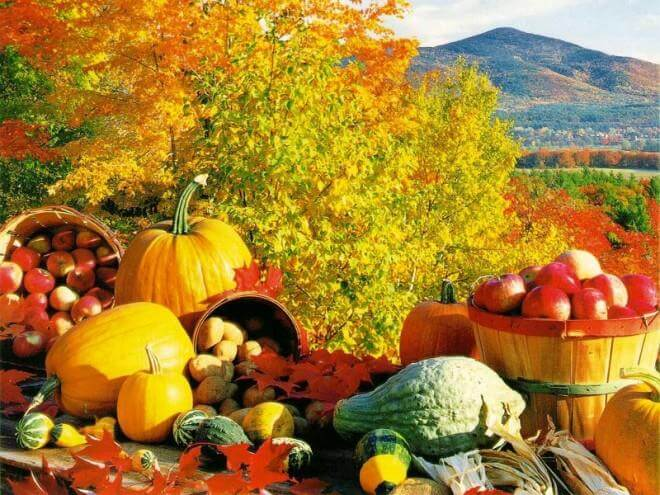 Zakaj jeseni kuhajte hrano?