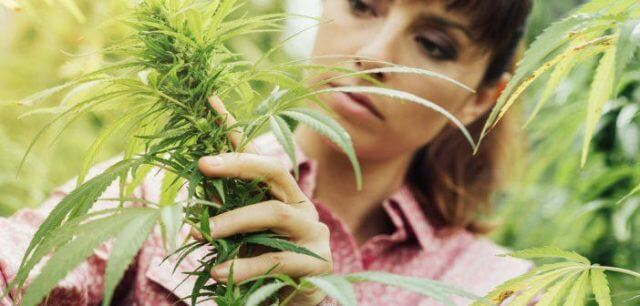 zdravljenje-s-kanabinoidi-iz-konoplje