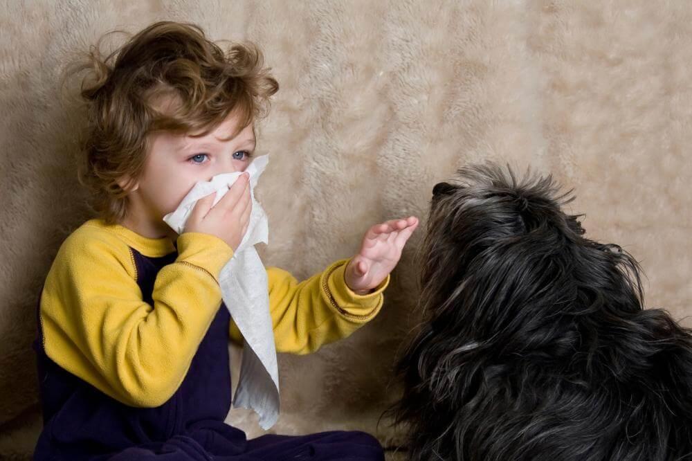 Alergije na živalsko dlako so zelo pogoste