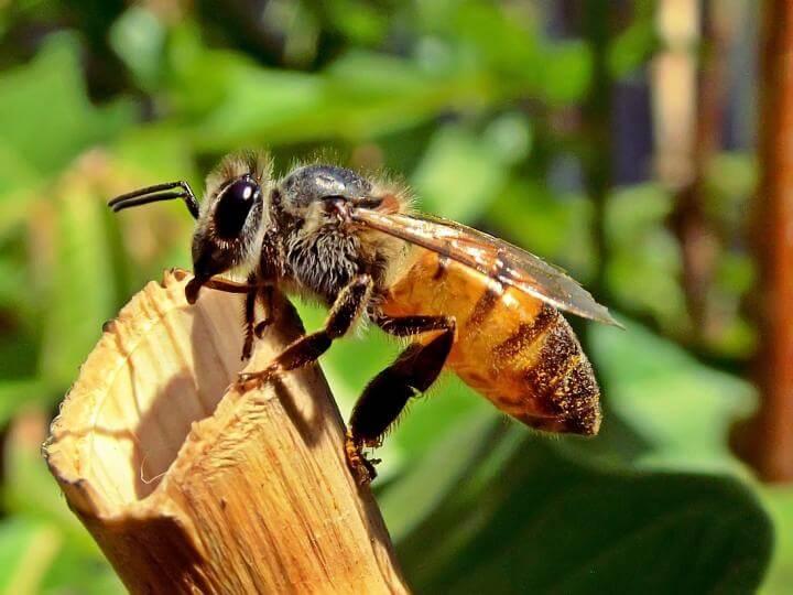 Pik čebele – 11 naravnih rešitev, ki omilijo bolečino