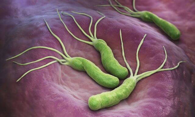 bakterija-helicobacter-pylori-in-zeolit