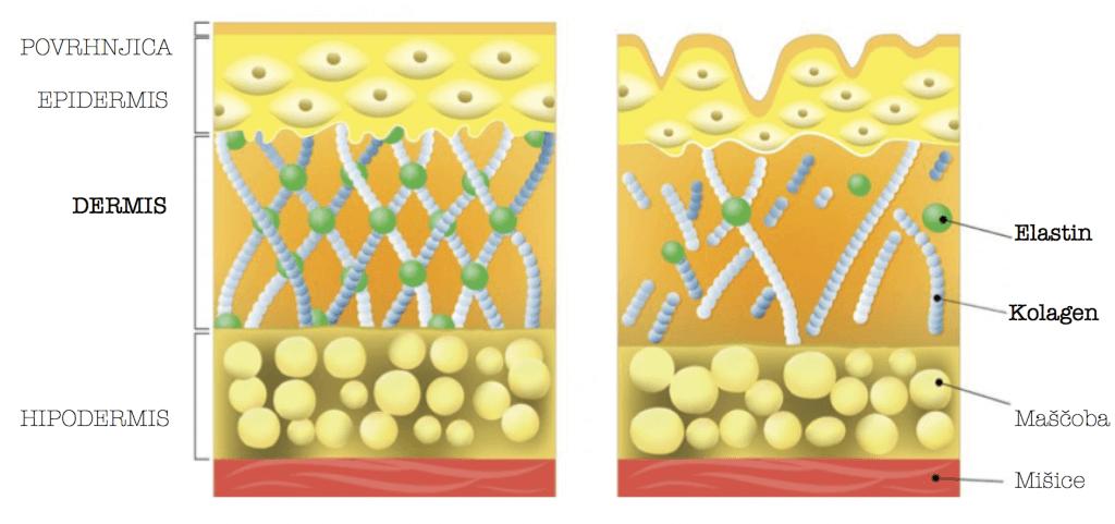 kolagen za kožo